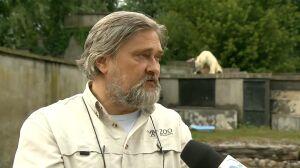 """""""Głupota jest szkodliwa"""". Dyrektor zoo o wejściu na wybieg dla niedźwiedzi"""