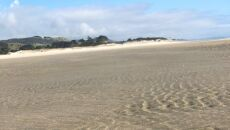 Meduza festonowa na plaży (autorzy: Eve i Adam Dickinson)